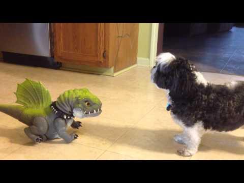 Dog vs Dinosaur