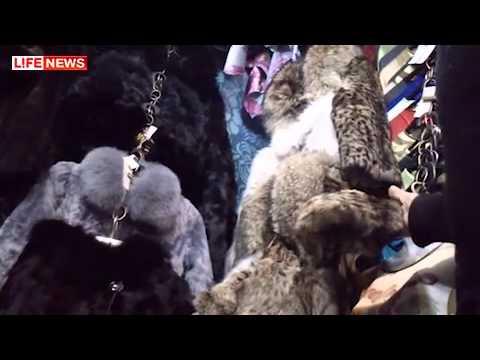 Купить шубку норковую в Харькове магазин