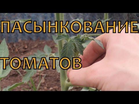 Пасынкование помидор, как