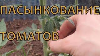 ПАСЫНКОВАНИЕ томатов и ФОРМИРОВАНИЕ кустов в теплице(Это видео о том, как формировать супердетерминатные, детермининатные и индетерминантные томаты в теплице,..., 2014-06-09T15:53:17.000Z)