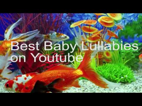 Calming Songs To Put A Baby To Sleep Lyrics Baby Lullaby Lullabies For Bedtime Fisher Price Style