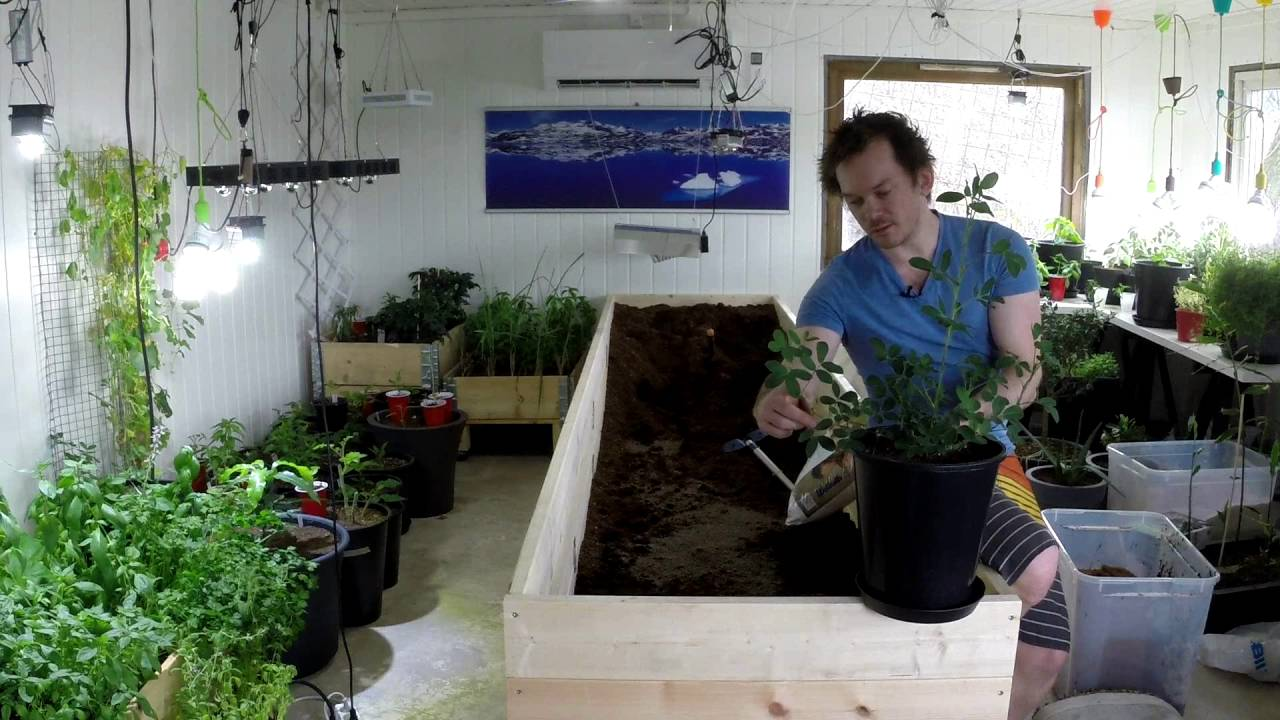 Huge Indoor Raised Bed Project For My Peppers