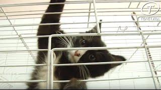 «Проблема»: когда в Туле появится городской приют для бездомных животных?