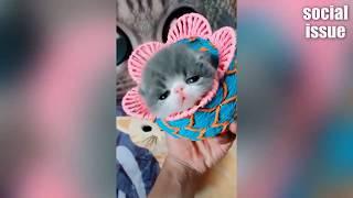 Подборка самых смешных видео про животных 2018