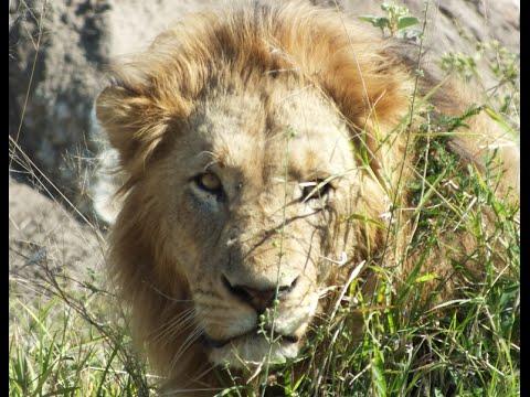 Paquete turístico y viaje exótico a Safari Fotografico