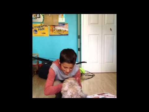 Kid Gets Bit By Dog Watch What Happens Next