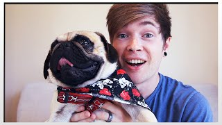 Say Hello To Hugo The Pug!!