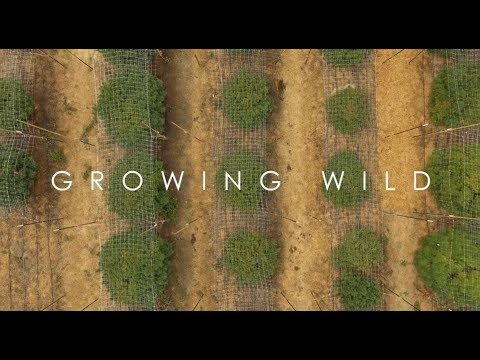 Growing Wild Episode 1 Full | Recreational Marijuana With Cannador