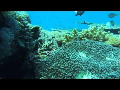Tutuala Beach Snorkel Timor Leste