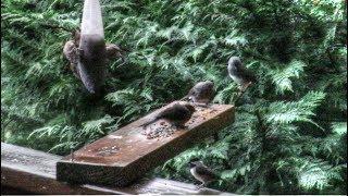 ハリケーンが去った朝、裏庭に食事をしに集まってきた小鳥たち