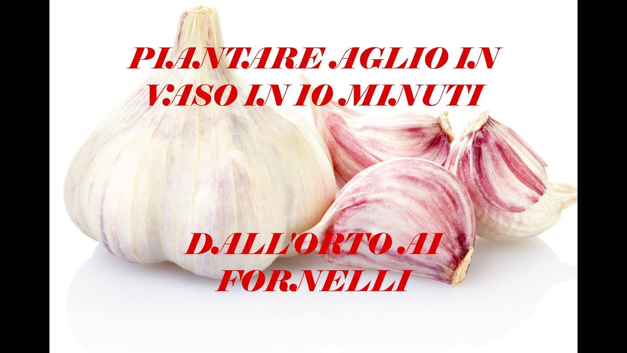 Piantare aglio in vaso in 10 minuti dall 39 orto ai for Piantare aglio