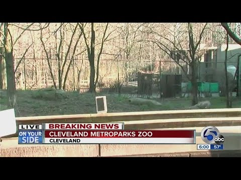 2-year-old falls into cheetah exhibit at Cleveland Metroparks Zoo, in stable condition