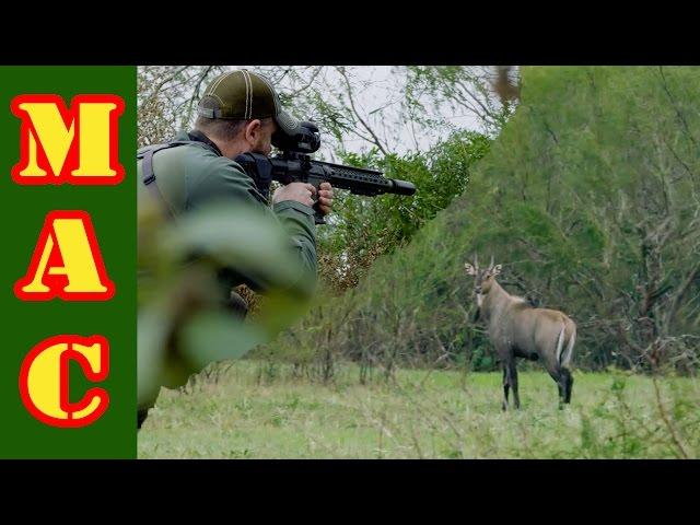 Nilgai Hunt in South Texas with FLIR! Warning: Kill Shot Shown.