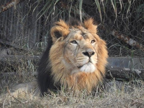 Delhi Zoo All Animals, Ticket Price and Timings