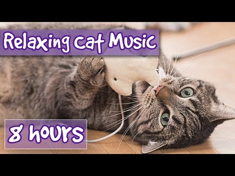 Music for Cats – 8 hour Relaxing Cat Music Playlist, Help Cats Sleep and Relax. Help with anxiety 🐱💤