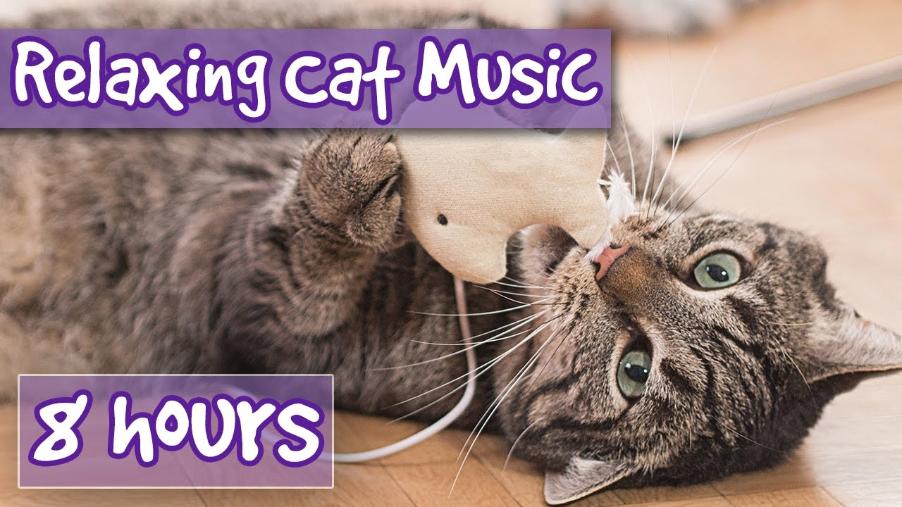 Music For Cats 8 Hour Relaxing Cat Music Playlist Help Cats Sleep And Relax Help With Anxiety Youtube