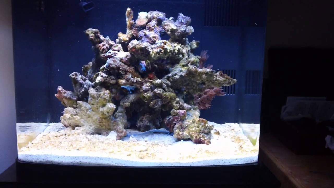 Coralife Biocube Basics Week 1 Rock Sand Amp Water Youtube