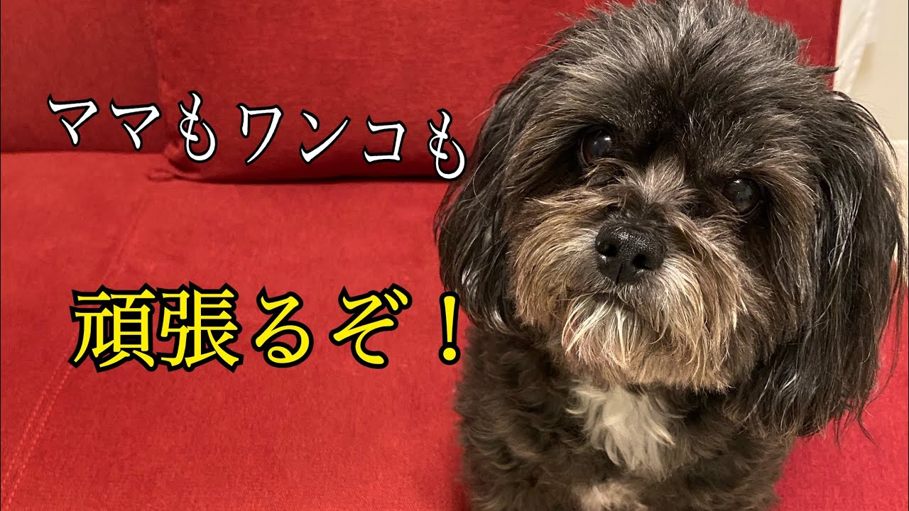 白木優子からのお知らせです。