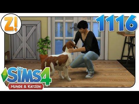 Sims 4 [Hunde & Katzen]: Ein neuer Freund für Lotte? #1116 | Let's Play [DEUTSCH]