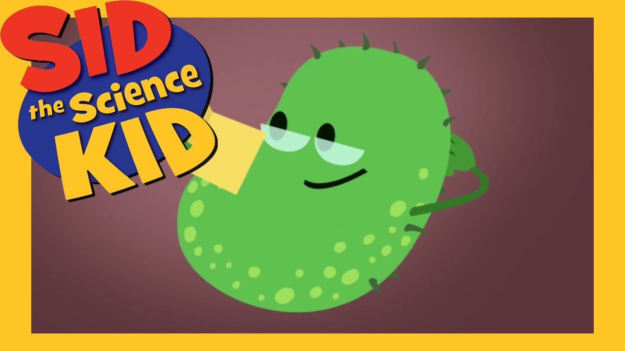 Sid Science Kid Youtube Germs