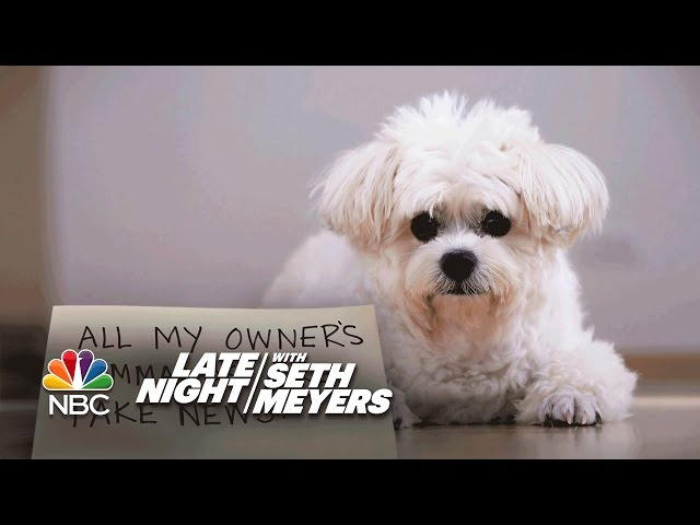 Extreme Dog Shaming: Instagram Comments, Fake News