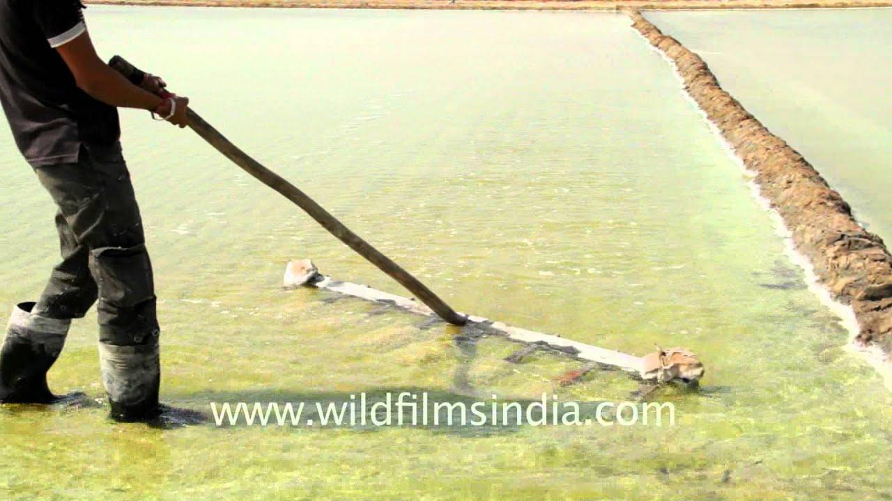 Collecting crystallized salt in sea water reservoir Gujarat