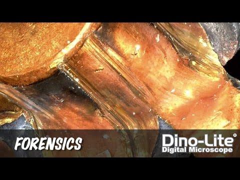 Dino-Lite Applications: Forensics