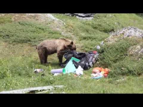 Смотреть Как нас гонял медведь, а мы - медведя онлайн