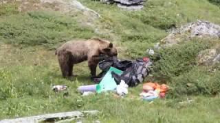 Как нас гонял медведь, а мы - медведя