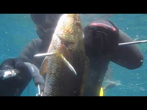 Pesca in apnea - Ibiza - Chasse sous Marine - Spearfishing - Caza Submarina