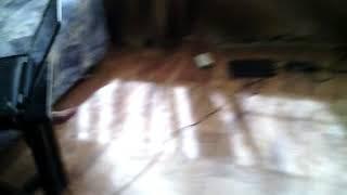 Сумашедший котик