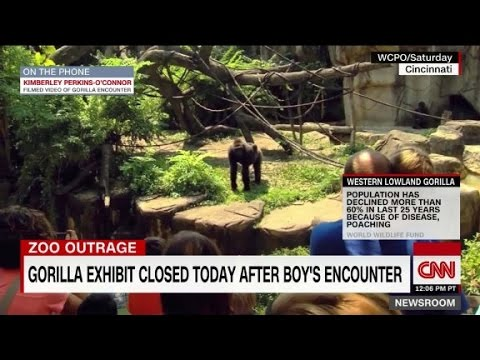 Witness: Gorilla pulled the child's pants up