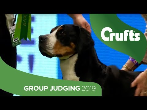 Working Group Judging And Presentation | Crufts 2019
