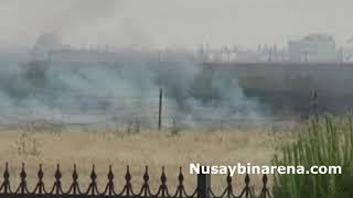 Türkiye Suriye sınırında çıkan yangın ekinlere sıçramadan askerler söndürdü