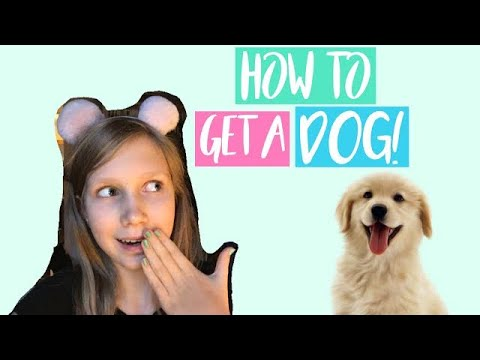 6 Ways To Convince Your Parents To GET A DOG!