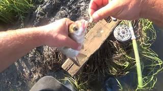 Рыбалка на леща на сало. Палатка ATEMI ОКА-2,первые впечатления.Проверка дождём.
