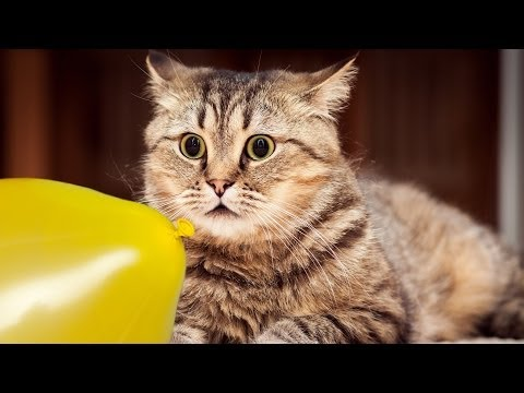Cats + Dogs + Balloons = Fun