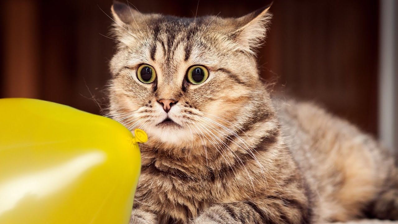 Cats and dogs vs balloons - Funny animal compilation
