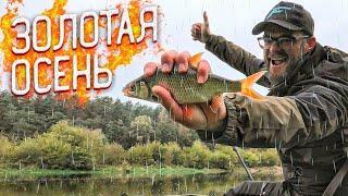 Осенняя ЛОВЛЯ ФИДЕРОМ на РЕКЕ Красивые ПОКЛЁВКИ Рыбалка в Беларуси 2020