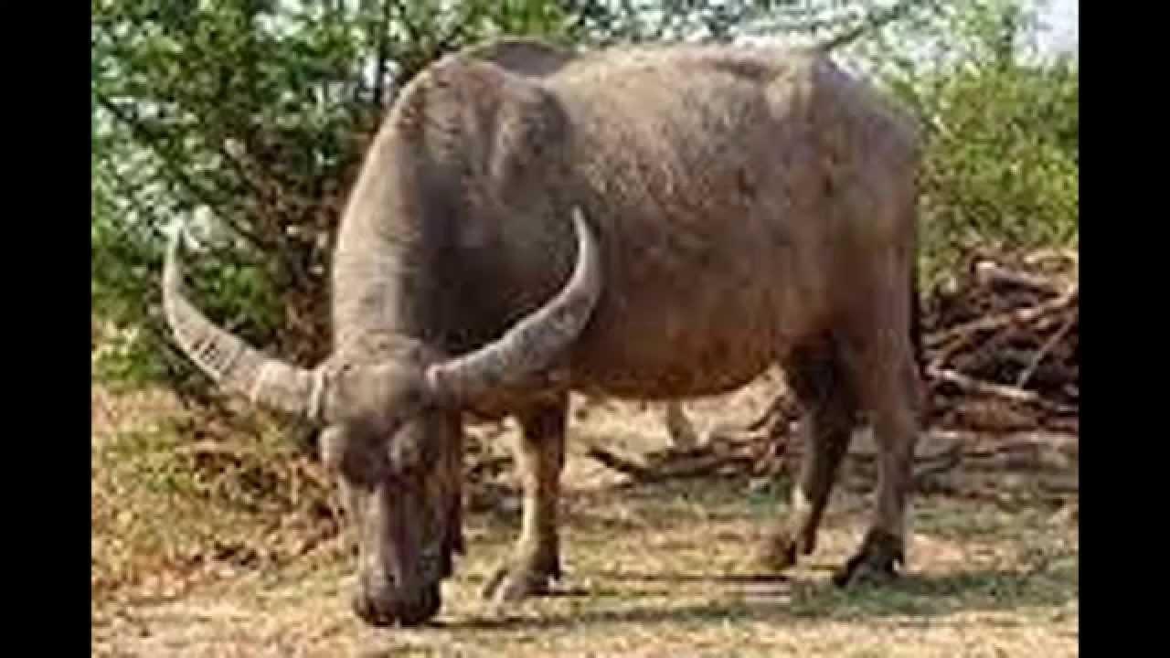 9700 Gambar Hewan Fauna Bagian Timur HD Terbaik