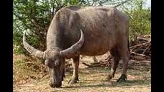 Persebaran Fauna Di Indonesia Bagian Barat