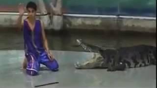 Шоу Крокодилов. Не повезло. Жесть!