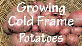 Gardening Tip: Growing Early Potatoes in a cold frame (Ep 4)
