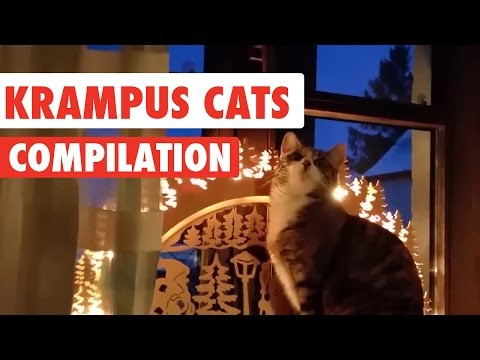 Krampus Cats Video Compilation 2016
