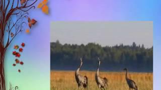 Птицы осенью  Урок во 2 классе  Соловьёва И И  Видеопрезентация