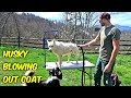 Husky Coat Blow Out mp3