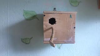 Как разводить волнистых попугаев, кратко, основа.