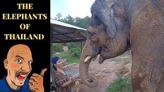 ELEPHANTS IN THAILAND V452
