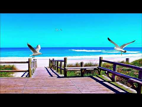 Ocean Sounds with Seagulls |  2 hours of Beach Sounds