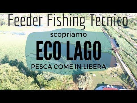 FEEDER FISHING TECNICO ALL' ECO LAGO - I.D.P. #66